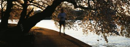 Cherry Blossoms and morning jogger at the riverban