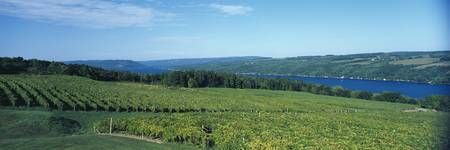 Vineyards Finger Lakes Region NY