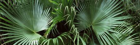 Close up of palm leaves Joan M. Durante Park Long