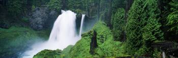 Waterfall in lush green forest