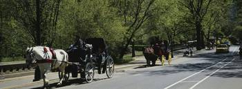 Horse carriages moving on a road
