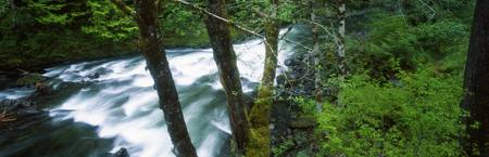 Water cascading through forest in Solduc River Va