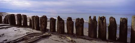 Wood pilings on the beach Dungeness Spit Olympic