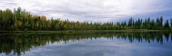 Reflection of trees in a lake Alaska