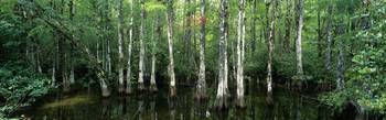 Big Cypress Nature Preserve FL
