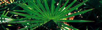 Green Palm Leaf Applachacola FL