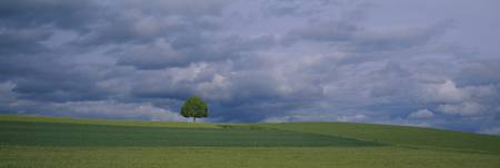 Storm Clouds and Linden Tree Switzerland