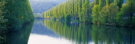 Poplar Trees Along Aare River Switzerland