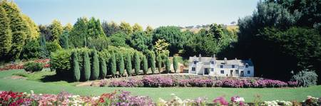 Cypress trees in a formal garden