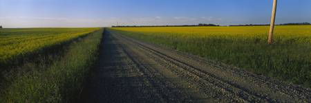 Country road passing through a field