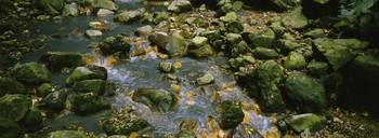 Mineral Covered Rocks in Stream St Lucia Windward