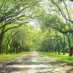"""Wormsloe Historic Site Savannah GA"" by Panoramic_Images"