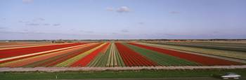 High angle view of cultivated flowers on a field