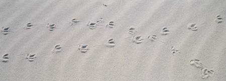 High angle view of bird footprints on the sand