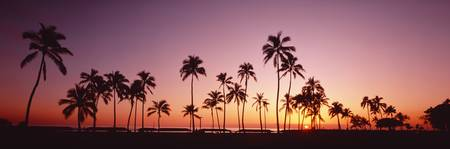 Sunset Palm Trees Oahu Island HI