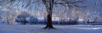 Winter Trees Perkshire Scotland