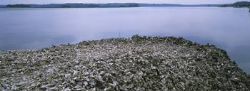 High angle view of oyster shells at the seaside