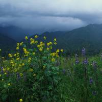 """Storm Clouds Over Wildflowers CA"" by Panoramic Images"