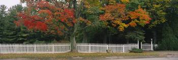 Tree near a picket fence