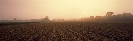Misty Field Tayside Scotland