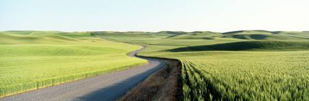Gravel Road Through Barley and Wheat Fields WA