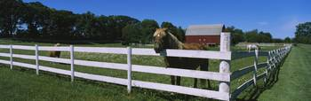 Horse peeking over a fence on a farm