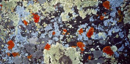 Lichens on Rock CO