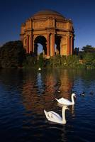 Swans and Palace of Fine Arts