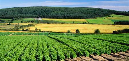 Potato Field Munlochy Bay Black Isle Scotland