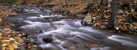 River flowing through a forest Delaware Water Gap