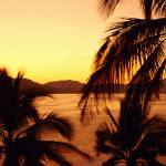 """Silhouette of palm trees at dusk"" by Panoramic_Images"