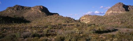 Organ Pipe Cactus National Monument AZ