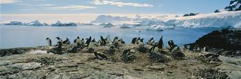 Penguins and Ice Flows Antarctica