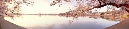 Cherry blossoms at the lakeside