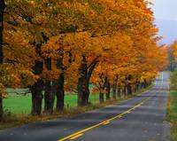 Rural Road in Autumn