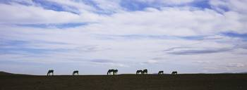 Silhouette of horses in a field