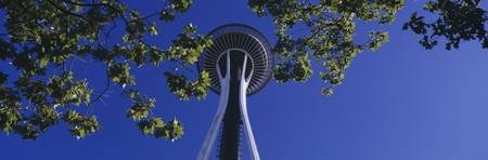 Space Needle Maple Trees Seattle Center Seattle W