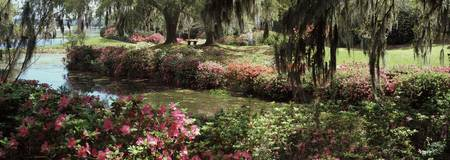 Azaleas and willow trees in a park