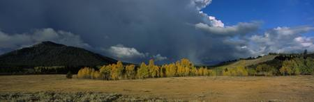 Storm Clouds and Aspens Grand Teton National Park