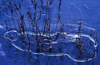 Ice Around Pond Grasses