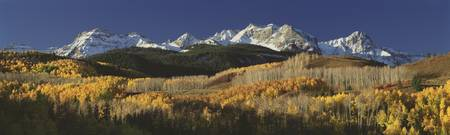 Autumnal view of aspen trees and the Rocky Mounta