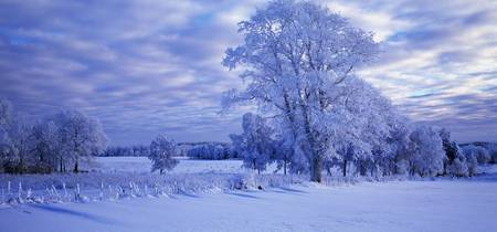 Winter Scenic Betsemark Sweden