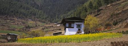 Mustard field in front of a farmhouse