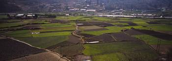 Aerial view of cultivated fields