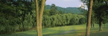 Trees on a golf course