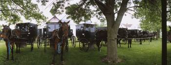 Amish horses and buggies parked at a farm