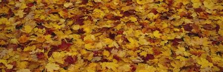 Close-up of fallen leaves