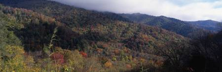 Great Smoky Mountains National Park TN