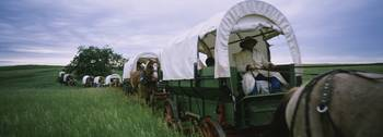 Historical reenactment of covered wagons in a fie
