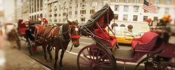 Horse drawn carriages at the roadside Central Par